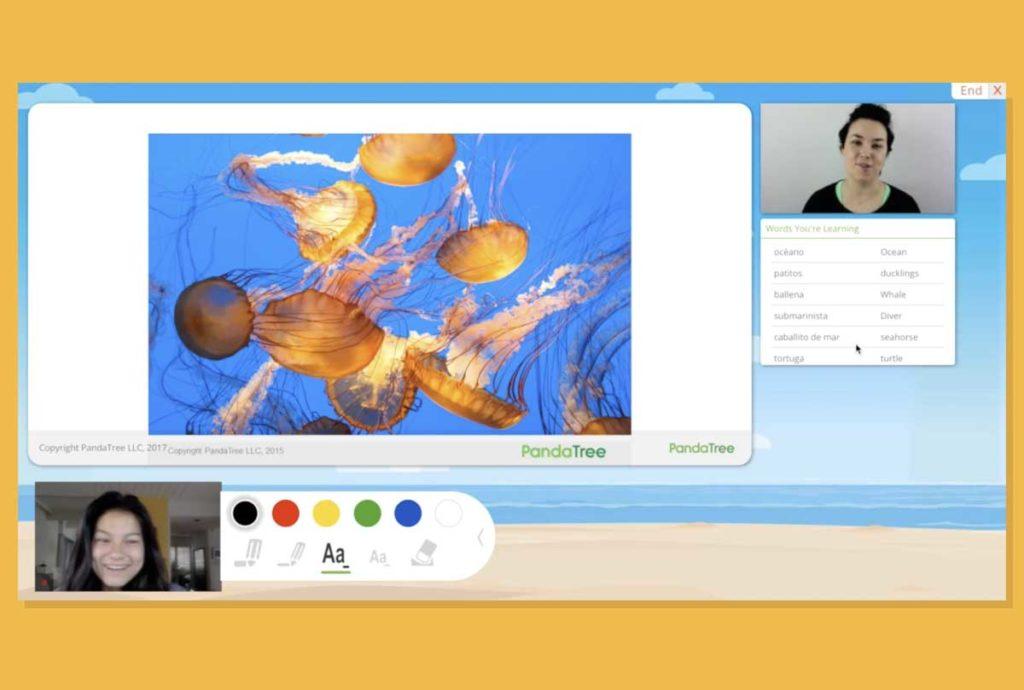 PandaTree user interface